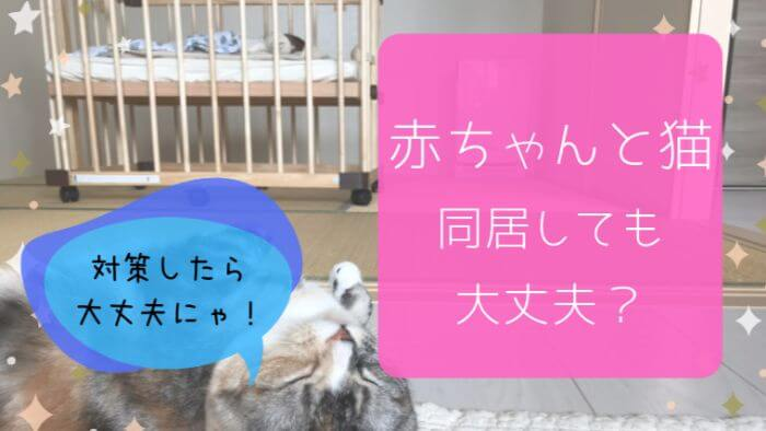 赤ちゃんと猫の同居