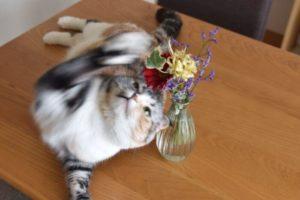 ブルーミーライフと猫の写真